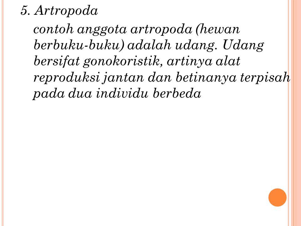 5. Artropoda contoh anggota artropoda (hewan berbuku-buku) adalah udang.