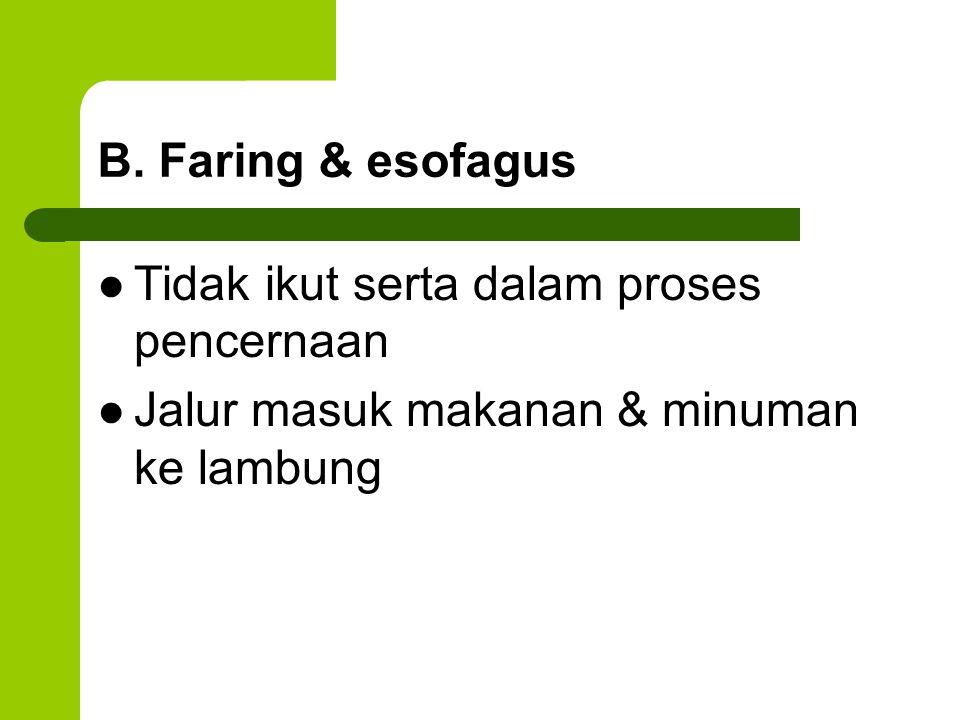 B. Faring & esofagus Tidak ikut serta dalam proses pencernaan.