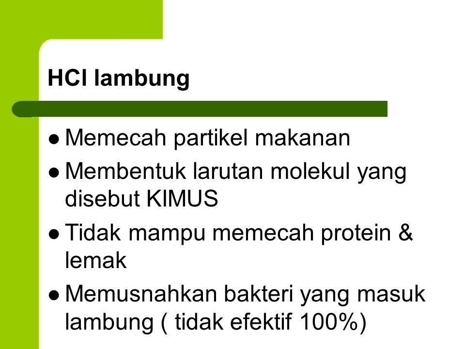 HCl lambung Memecah partikel makanan. Membentuk larutan molekul yang disebut KIMUS. Tidak mampu memecah protein & lemak.