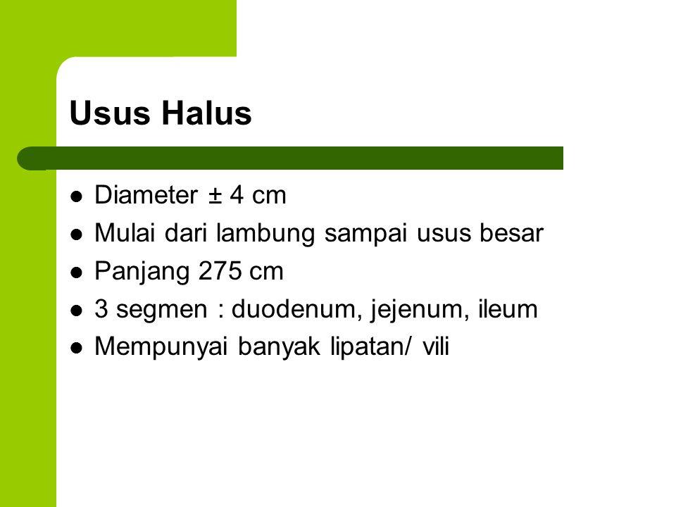 Usus Halus Diameter ± 4 cm Mulai dari lambung sampai usus besar