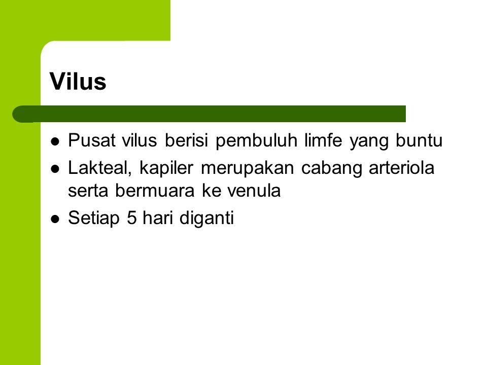 Vilus Pusat vilus berisi pembuluh limfe yang buntu