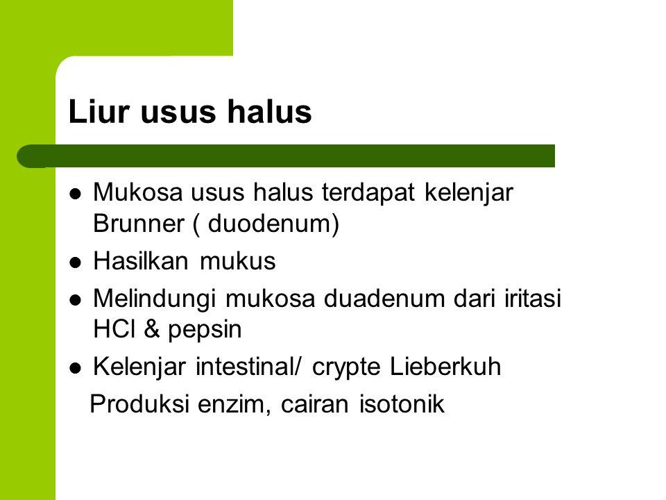 Liur usus halus Mukosa usus halus terdapat kelenjar Brunner ( duodenum) Hasilkan mukus. Melindungi mukosa duadenum dari iritasi HCl & pepsin.