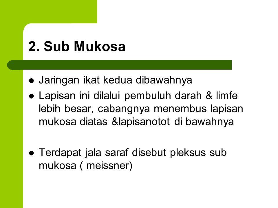 2. Sub Mukosa Jaringan ikat kedua dibawahnya