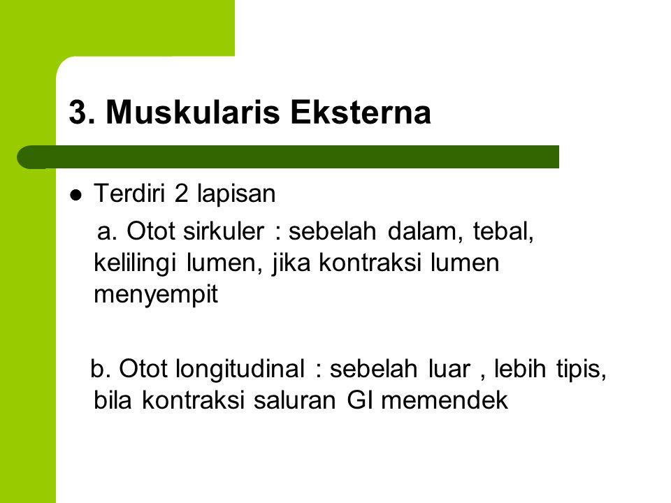 3. Muskularis Eksterna Terdiri 2 lapisan