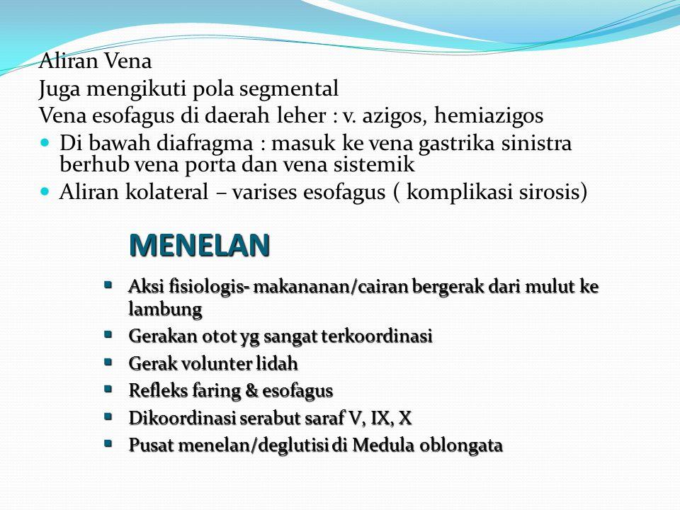 MENELAN Aliran Vena Juga mengikuti pola segmental