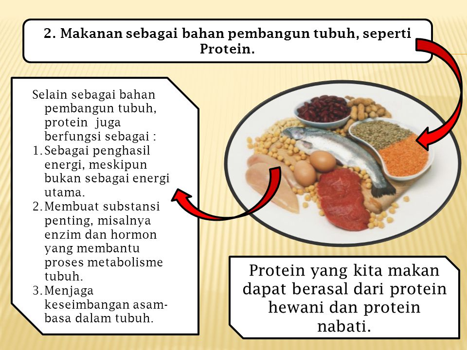 2. Makanan sebagai bahan pembangun tubuh, seperti Protein.