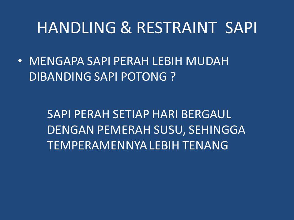 HANDLING & RESTRAINT SAPI