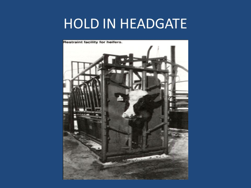 HOLD IN HEADGATE