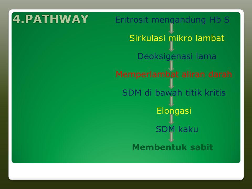 4.PATHWAY