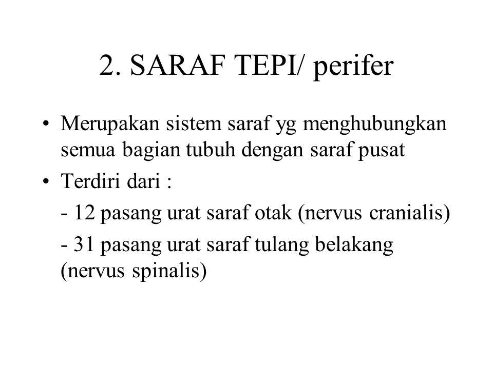 2. SARAF TEPI/ perifer Merupakan sistem saraf yg menghubungkan semua bagian tubuh dengan saraf pusat.