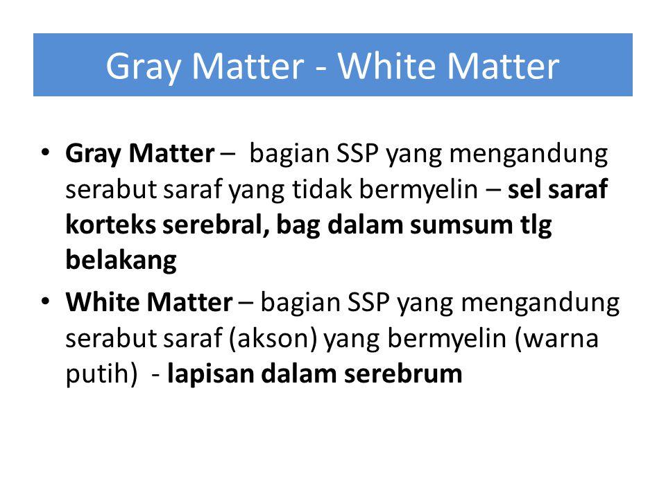 Gray Matter - White Matter