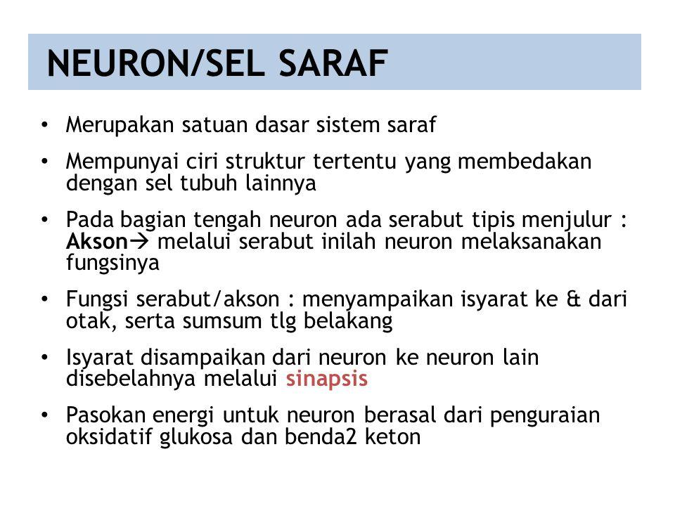 NEURON/SEL SARAF Merupakan satuan dasar sistem saraf