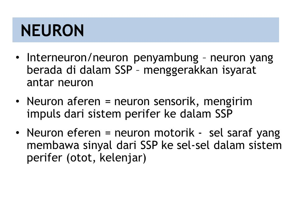 NEURON Interneuron/neuron penyambung – neuron yang berada di dalam SSP – menggerakkan isyarat antar neuron.
