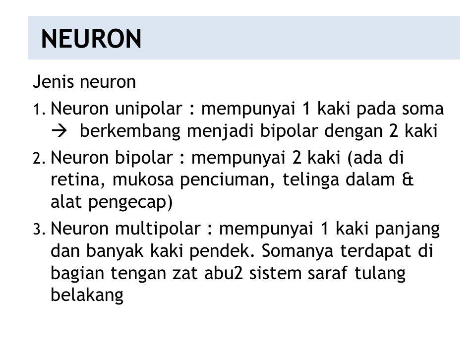 NEURON Jenis neuron. Neuron unipolar : mempunyai 1 kaki pada soma  berkembang menjadi bipolar dengan 2 kaki.
