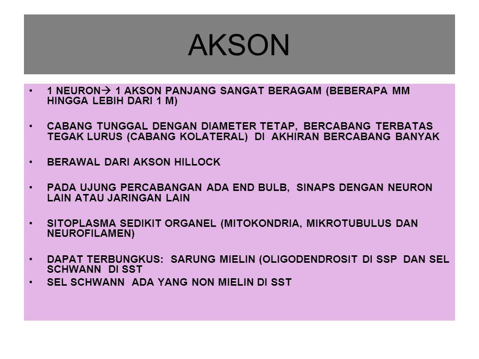 AKSON 1 NEURON 1 AKSON PANJANG SANGAT BERAGAM (BEBERAPA MM HINGGA LEBIH DARI 1 M)