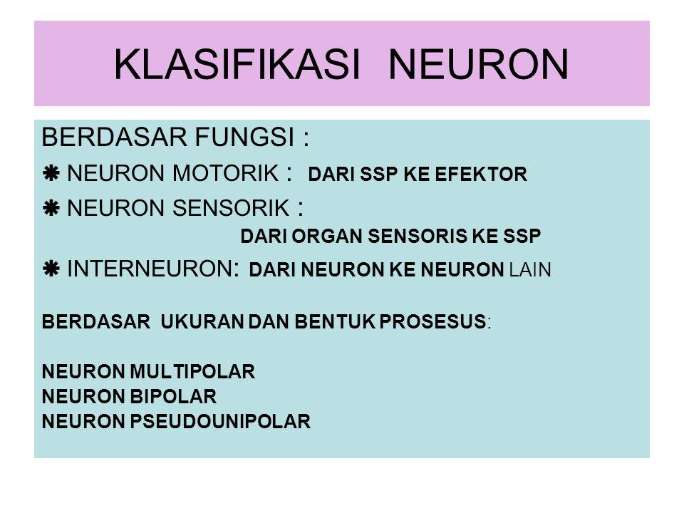 KLASIFIKASI NEURON BERDASAR FUNGSI :