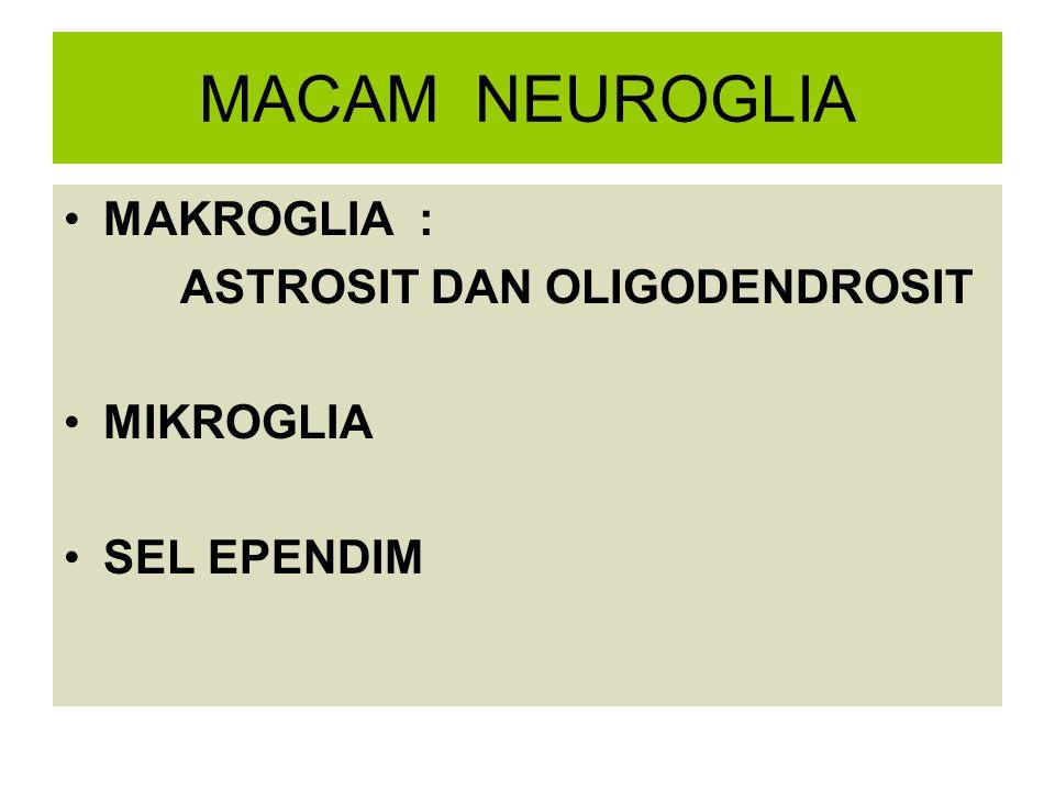 MACAM NEUROGLIA MAKROGLIA : ASTROSIT DAN OLIGODENDROSIT MIKROGLIA