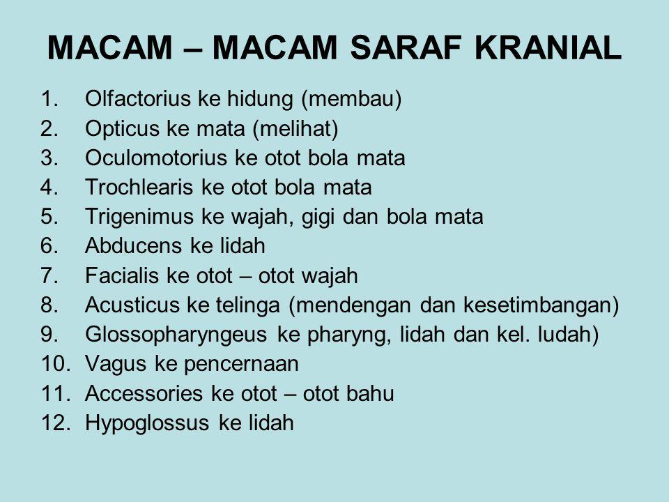 MACAM – MACAM SARAF KRANIAL