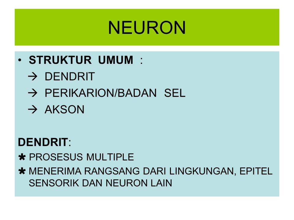 NEURON STRUKTUR UMUM :  DENDRIT  PERIKARION/BADAN SEL  AKSON