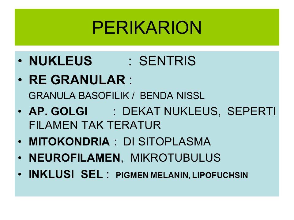 PERIKARION NUKLEUS : SENTRIS RE GRANULAR :
