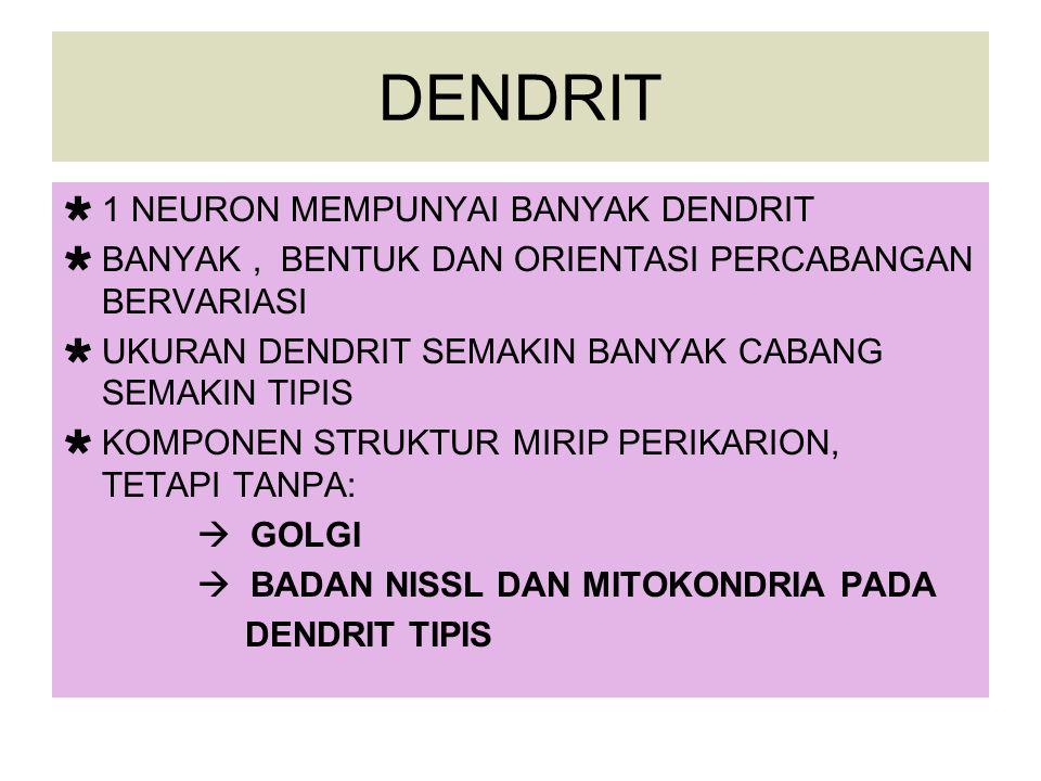 DENDRIT 1 NEURON MEMPUNYAI BANYAK DENDRIT
