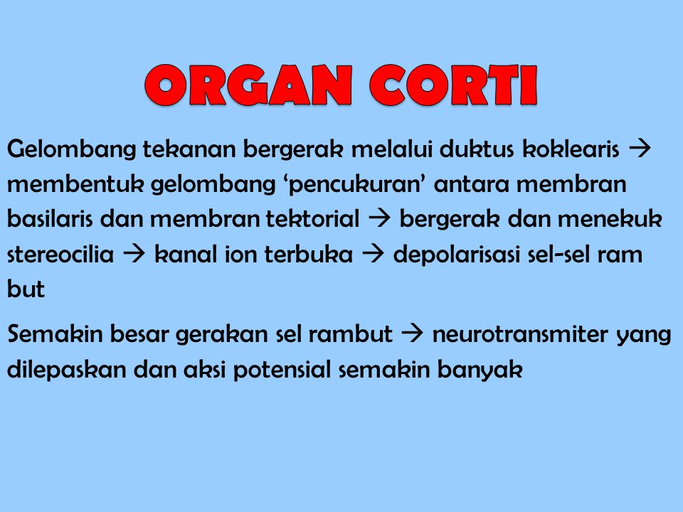 ORGAN CORTI