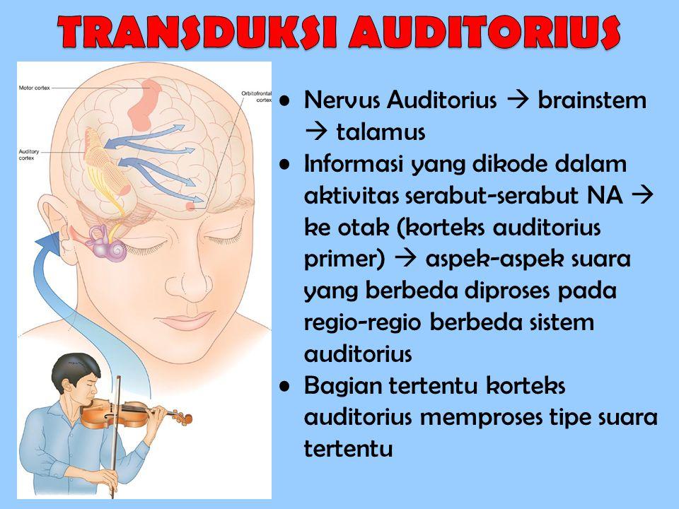 TRANSDUKSI AUDITORIUS