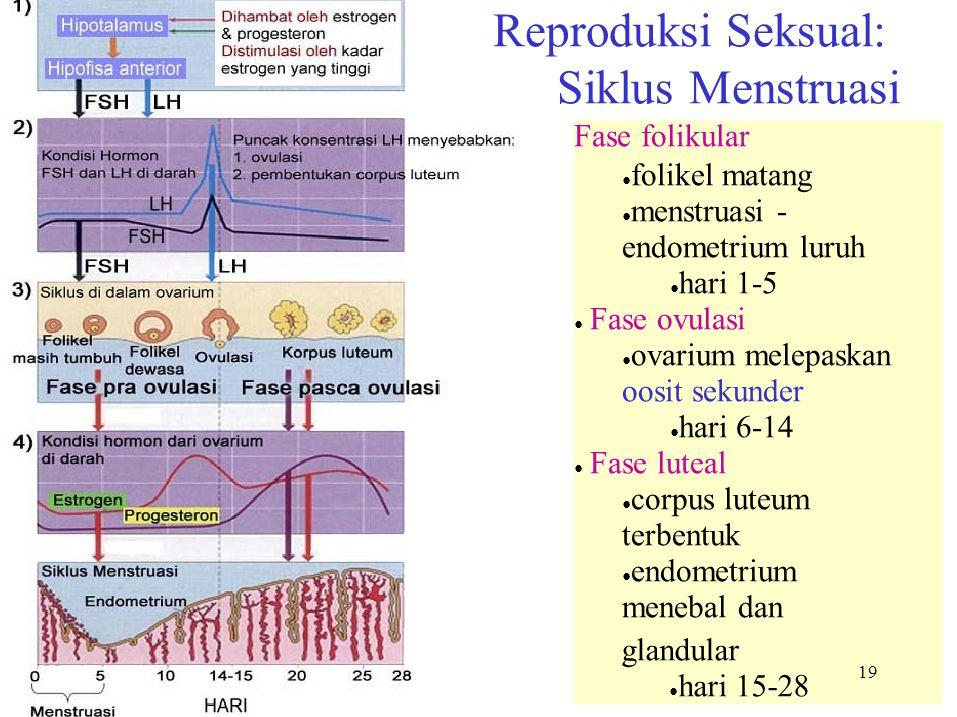 Reproduksi Seksual: Siklus Menstruasi Fase folikular ●folikel matang