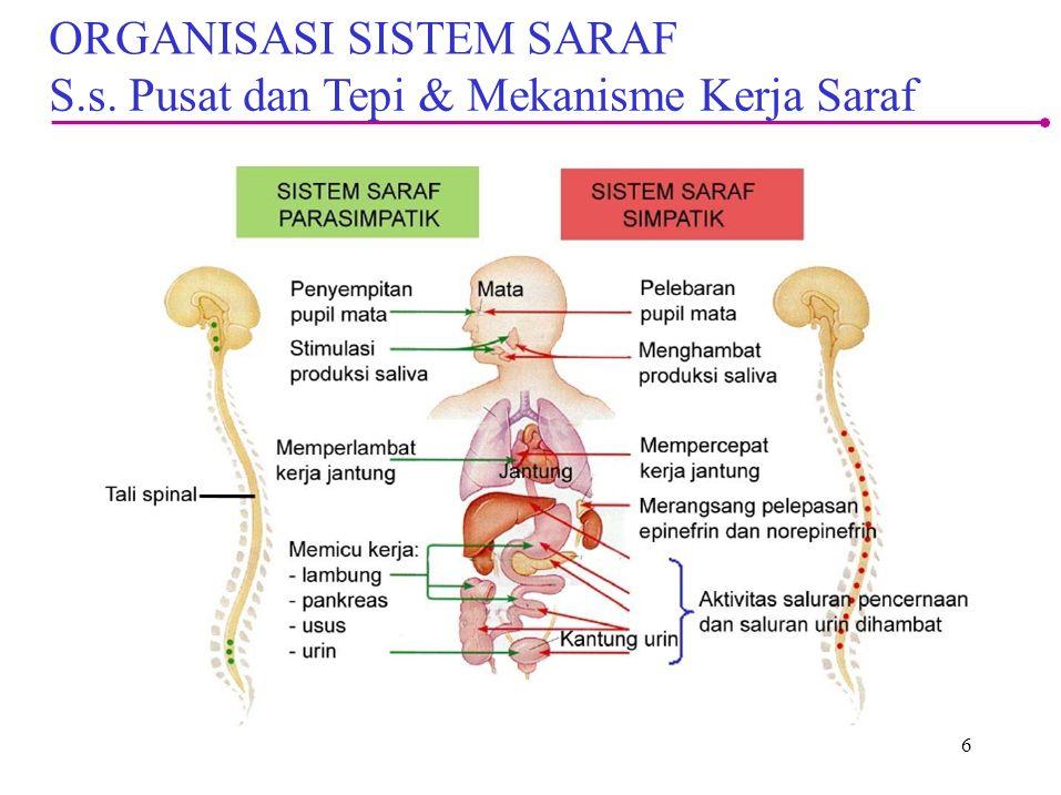 ORGANISASI SISTEM SARAF S.s. Pusat dan Tepi & Mekanisme Kerja Saraf
