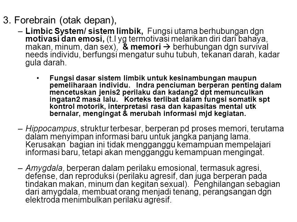 Forebrain (otak depan),