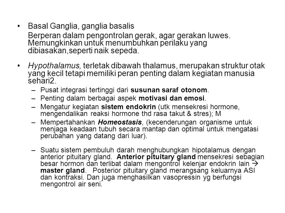 Basal Ganglia, ganglia basalis