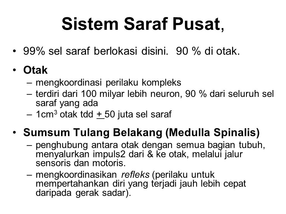 Sistem Saraf Pusat, 99% sel saraf berlokasi disini. 90 % di otak. Otak