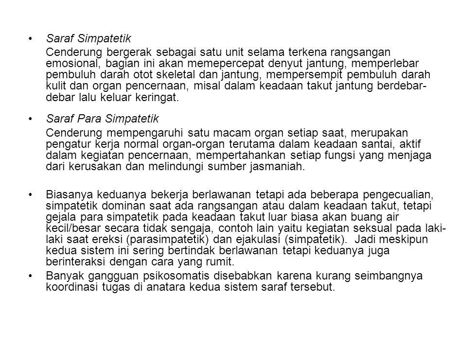 Saraf Simpatetik