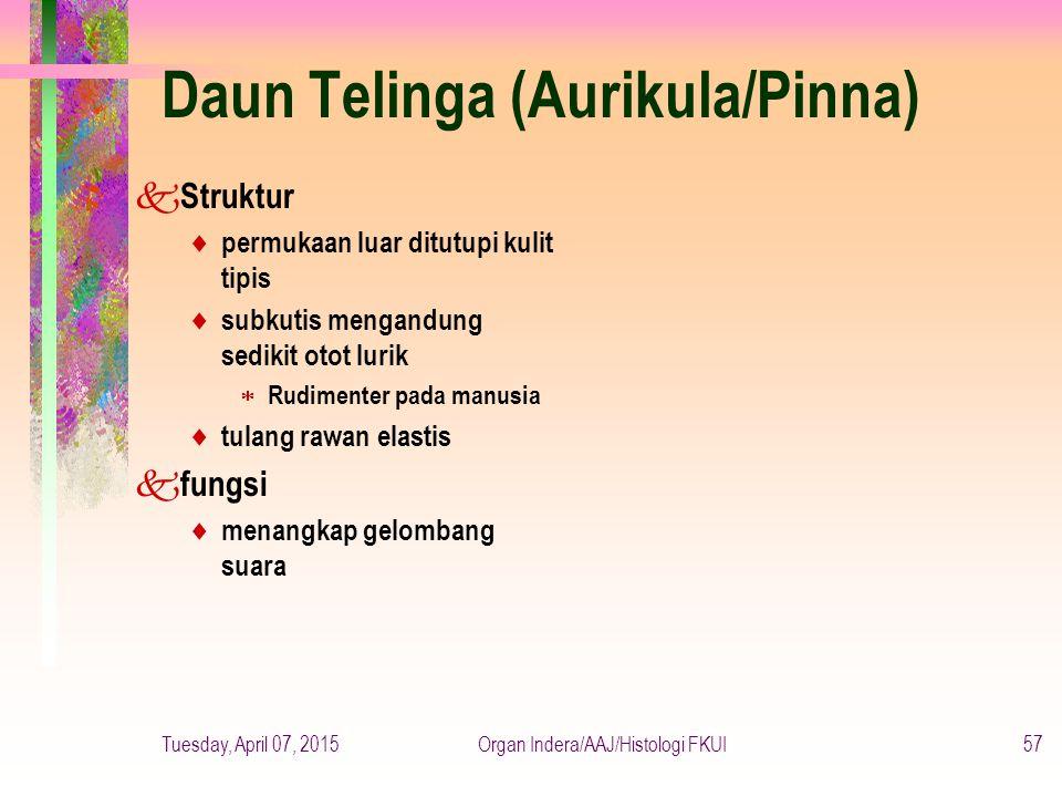 Daun Telinga (Aurikula/Pinna)