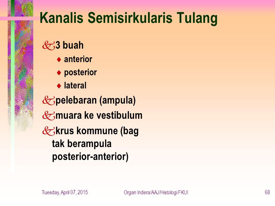 Kanalis Semisirkularis Tulang