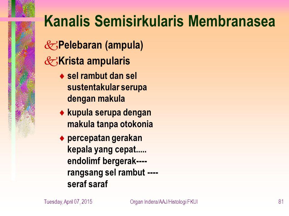 Kanalis Semisirkularis Membranasea