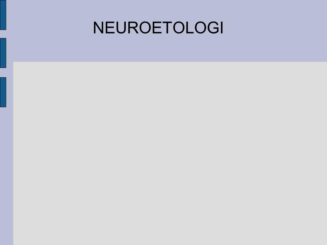 NEUROETOLOGI