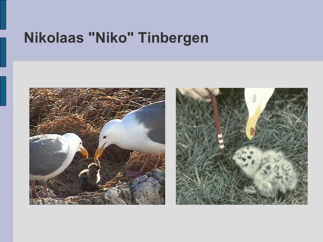 Nikolaas Niko Tinbergen