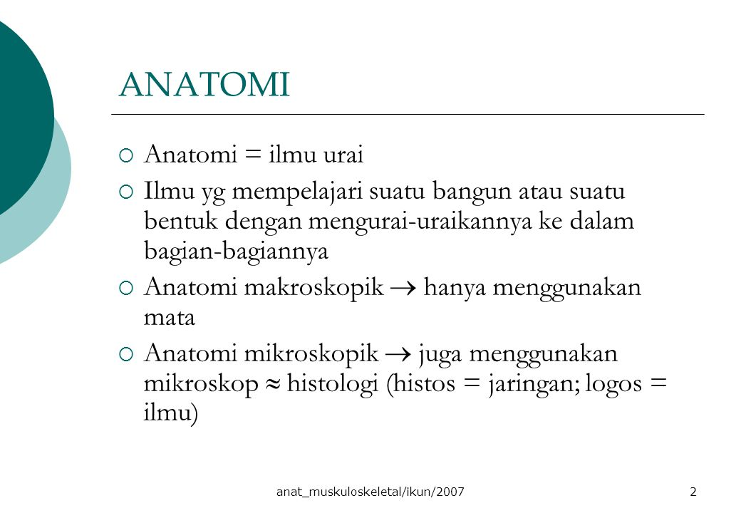 anat_muskuloskeletal/ikun/2007