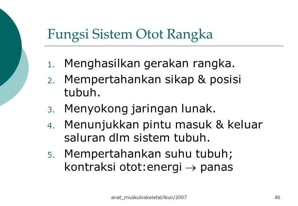 Fungsi Sistem Otot Rangka