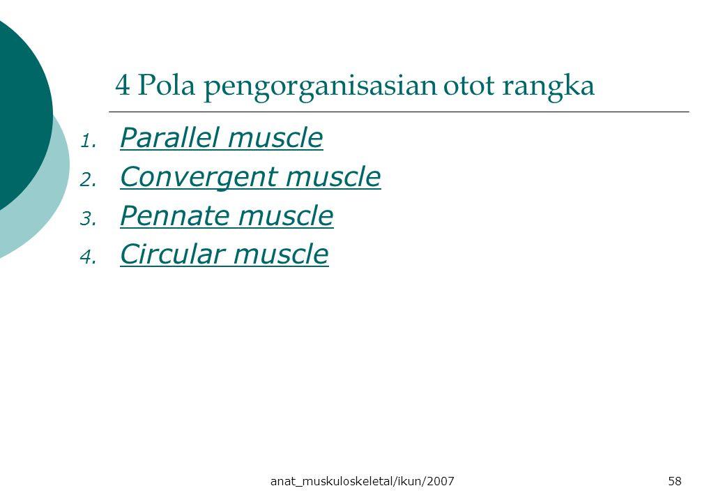 4 Pola pengorganisasian otot rangka