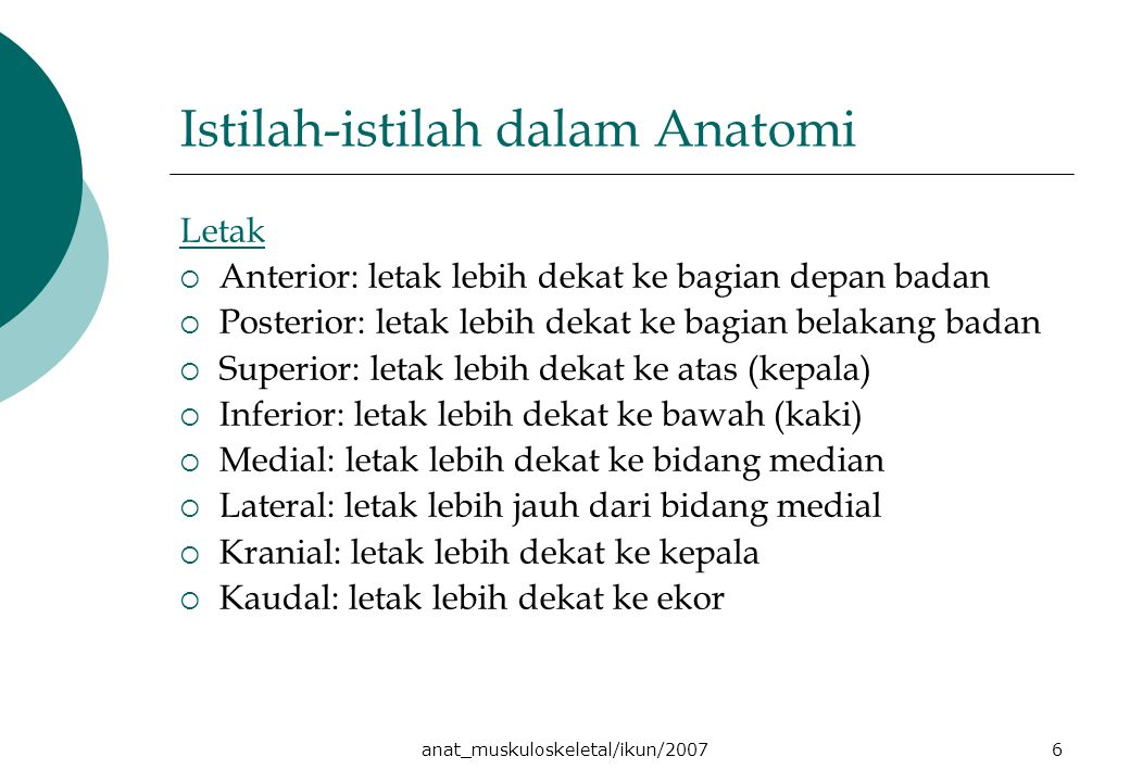 Istilah-istilah dalam Anatomi