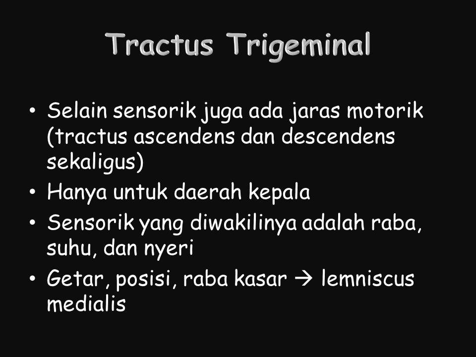 Tractus Trigeminal Selain sensorik juga ada jaras motorik (tractus ascendens dan descendens sekaligus)