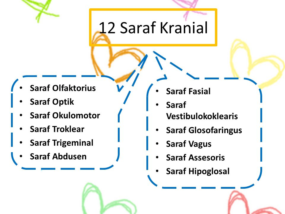 12 Saraf Kranial Saraf Olfaktorius Saraf Fasial Saraf Optik