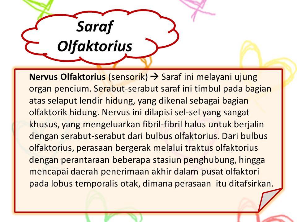 Saraf Olfaktorius