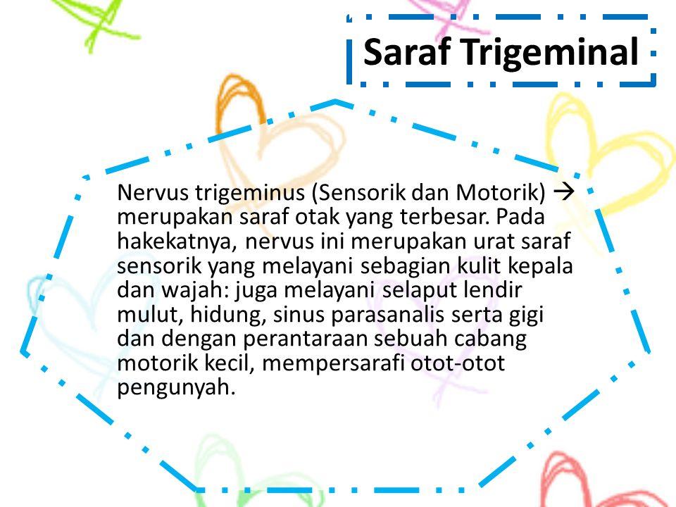 Saraf Trigeminal