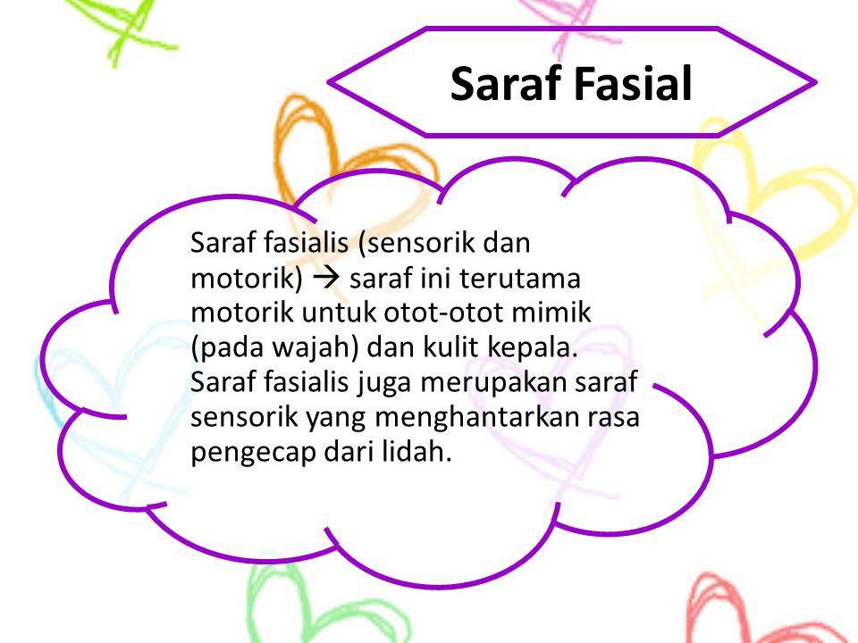 Saraf Fasial