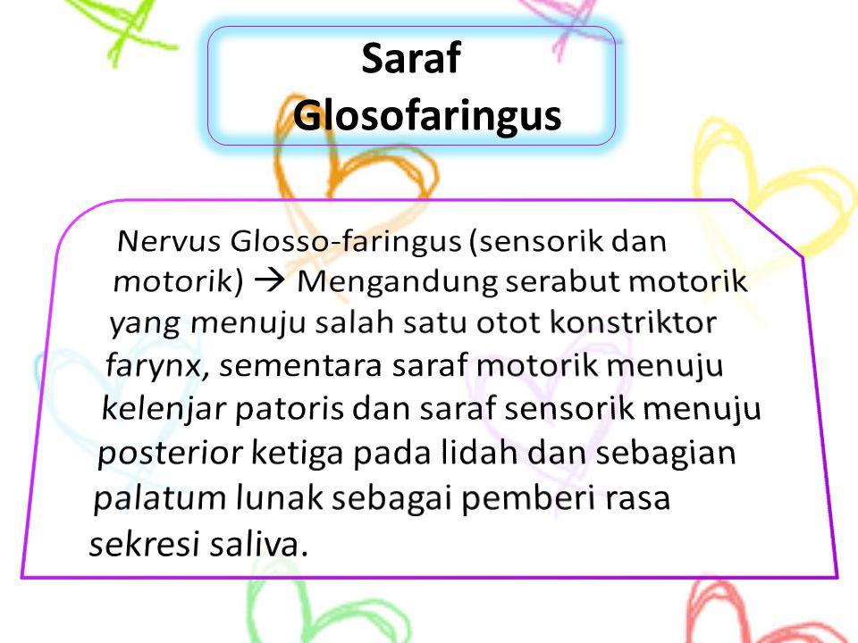 Saraf Glosofaringus