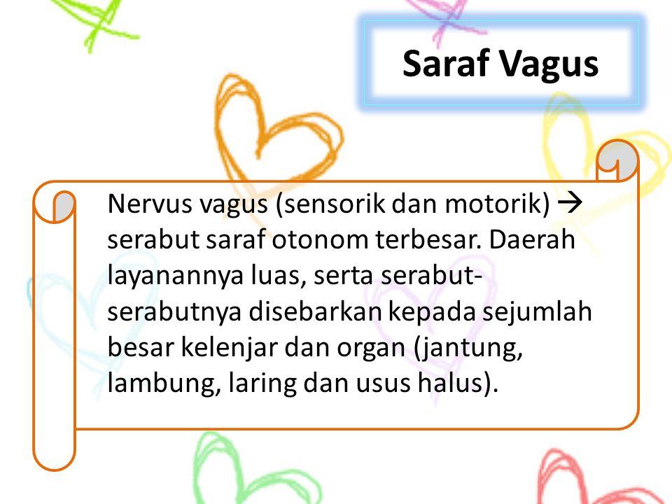 Saraf Vagus