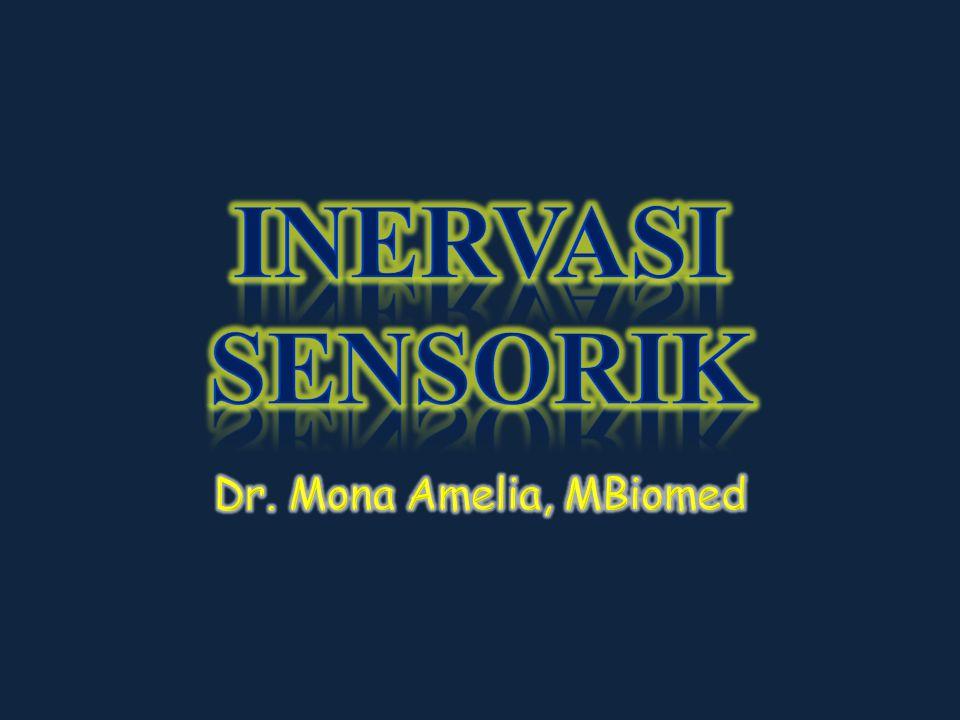 INERVASI SENSORIK Dr. Mona Amelia, MBiomed